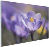 Bloeiende paarse bloem Glas 180x120 cm - Foto print op Glas (Plexiglas wanddecoratie) XXL / Groot formaat!