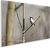 Staartmees zit in een boom tijdens de winter Plexiglas 180x120 cm - Foto print op Glas (Plexiglas wanddecoratie) XXL / Groot formaat!