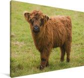 Portret van een Schotse hooglander kalf Canvas 90x60 cm - Foto print op Canvas schilderij (Wanddecoratie woonkamer / slaapkamer) / Wilde dieren Canvas Schilderijen