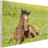 Connemara veulen in weiland Hout 30x20 cm - klein - Foto print op Hout (Wanddecoratie)