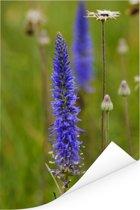 Paarse bloemen van de lange ereprijs Poster 80x120 cm - Foto print op Poster (wanddecoratie woonkamer / slaapkamer)
