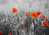 Papermoon Red Poppy Flowers Vlies Fotobehang 250x186cm 5-Banen