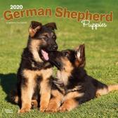 German Shepherd Puppies 2020 Square