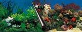 Ebi Foto Aquarium achterwand - Stone + Coral - 60 x 30 cm