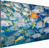 Vis zwemt in tegengestelde richting Aluminium 180x120 cm - Foto print op Aluminium (metaal wanddecoratie) XXL / Groot formaat!