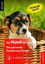 Ein Hund für mich! Die passende Hunderasse finden
