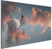 Meeuw bij zonsondergang Aluminium 90x60 cm - Foto print op Aluminium (metaal wanddecoratie)