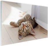 Spelende kitten Glas 120x80 cm - Foto print op Glas (Plexiglas wanddecoratie)