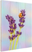 Lieveheersbeestje op lavendelbloem Hout 80x120 cm - Foto print op Hout (Wanddecoratie)