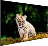Tijgerwelp in het bos Aluminium 90x60 cm - Foto print op Aluminium (metaal wanddecoratie)