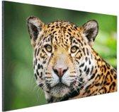 Close-up luipaard  Aluminium 180x120 cm / XXL / Grote Poster - Wanddecoratie cm - Foto print op Aluminium (metaal wanddecoratie) cm - Foto print op Poster (wanddecoratie) / Dieren Poster