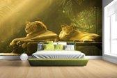Leeuwen in de jungle Fotobehang 380x265