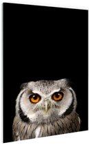 Portret uil Glas 60x90 cm - Foto print op Glas (Plexiglas wanddecoratie)