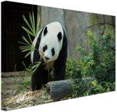 Grote panda Canvas 80x60 cm - Foto print op Canvas schilderij (Wanddecoratie)