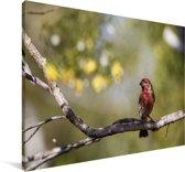 Roodkopamadine op een tak Canvas 140x90 cm - Foto print op Canvas schilderij (Wanddecoratie woonkamer / slaapkamer)