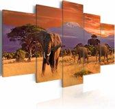 Schilderij - Afrika, Olifanten