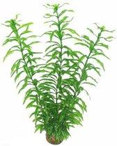 Superfish easy plants hoog nr. 2, van plastic 30 cm - 1 ST