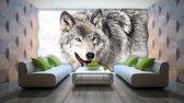 Fotobehang Papier Wolf | Grijs | 254x184cm