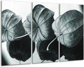 Glas schilderij Bloem | Grijs, Groen, Zwart | 120x80cm 3Luik | Foto print op Glas |  F006628