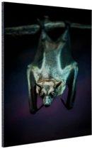 FotoCadeau.nl - Close-up vleermuis Aluminium 80x120 cm - Foto print op Aluminium (metaal wanddecoratie)
