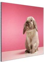 Konijnen voor roze muur Aluminium 60x40 cm - Foto print op Aluminium (metaal wanddecoratie)