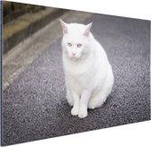Witte kat zit midden op straat Aluminium 120x80 cm - Foto print op Aluminium (metaal wanddecoratie)