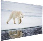 Ijsbeer op een winterdag Aluminium 30x20 cm - klein - Foto print op Aluminium (metaal wanddecoratie)