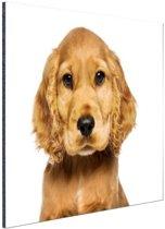 Close-up van een puppy Aluminium 90x60 cm - Foto print op Aluminium (metaal wanddecoratie)