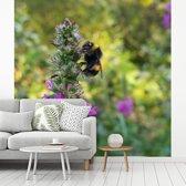Fotobehang vinyl - Hommel bevindt zich tussen de wilde bloemen breedte 300 cm x hoogte 300 cm - Foto print op behang (in 7 formaten beschikbaar)