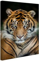 FotoCadeau.nl - Sumatraanse tijger zwarte achtergrond Canvas 20x30 cm - Foto print op Canvas schilderij (Wanddecoratie)
