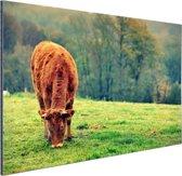 Koe in de herfst Aluminium 90x60 cm - Foto print op Aluminium (metaal wanddecoratie)