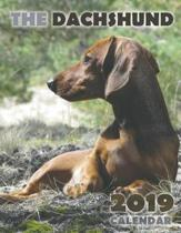 The Dachshund 2019 Calendar