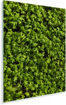 Afbeelding volledig gevuld met tuinkers Plexiglas 60x80 cm - Foto print op Glas (Plexiglas wanddecoratie)