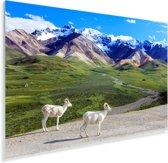 Dalschapen in het Nationaal park Denali in Noord Amerika met op de achtergrond een berglandschap Plexiglas 60x40 cm - Foto print op Glas (Plexiglas wanddecoratie)