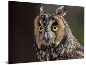 Close-up foto van een ransuil Aluminium 80x60 cm - Foto print op Aluminium (metaal wanddecoratie)
