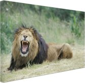Stoere leeuw Canvas 120x80 cm - Foto print op Canvas schilderij (Wanddecoratie woonkamer / slaapkamer) / Dieren Canvas Schilderij