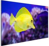Knalgele vis in koraalrif Aluminium 120x80 cm - Foto print op Aluminium (metaal wanddecoratie)