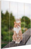 Kat zittend op balustrade Hout 20x30 cm - Foto print op Hout (Wanddecoratie)
