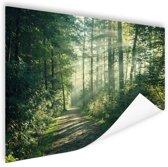 Zonnige oktobermorgen in het bos Poster 60x40 cm - Foto print op Poster (wanddecoratie woonkamer / slaapkamer)