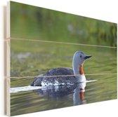 Roodkeelduiker zwemt in het water Vurenhout met planken 120x80 cm - Foto print op Hout (Wanddecoratie)