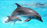 Diamond Painting Springende dolfijn met baby - 50 x 30 cm (vierkante steentjes, volledige bedekking)