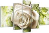 Glasschilderij Roos   Wit, Groen   170x100cm 5Luik   Foto print op Glas    F003333