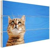 Kat met blauwe lucht Hout 30x20 cm - Foto print op Hout (Wanddecoratie)