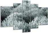Glas schilderij Bloemen | Grijs, Groen | 170x100cm 5Luik | Foto print op Glas |  F006506
