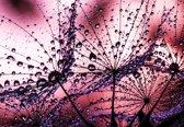 Fotobehang Dandelion | XXL - 312cm x 219cm | 130g/m2 Vlies