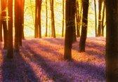 Fotobehang - Woodland at Dawn - 366 x 254 cm - Multi