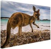 Wallaby op het strand Canvas 120x80 cm - Foto print op Canvas schilderij (Wanddecoratie woonkamer / slaapkamer) / Dieren Canvas Schilderijen