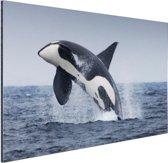 Springende orka Aluminium 90x60 cm - Foto print op Aluminium (metaal wanddecoratie)