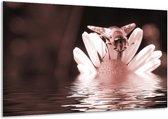 Glas schilderij Bloem   Bruin, Rood   120x70cm 1Luik   Foto print op Glas    F006597