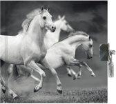 Animal Pictures Witte Paarden - Dagboek - 13,5 x 13 cm - Inclusief slotje
